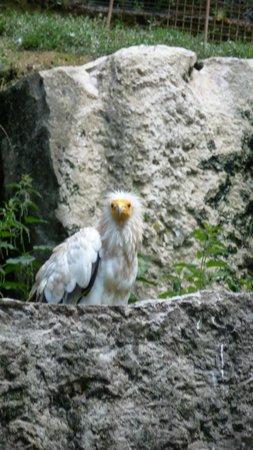 Le Parc des Oiseaux : vautour