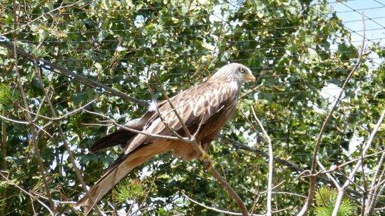 Le Parc des Oiseaux : Milan royal