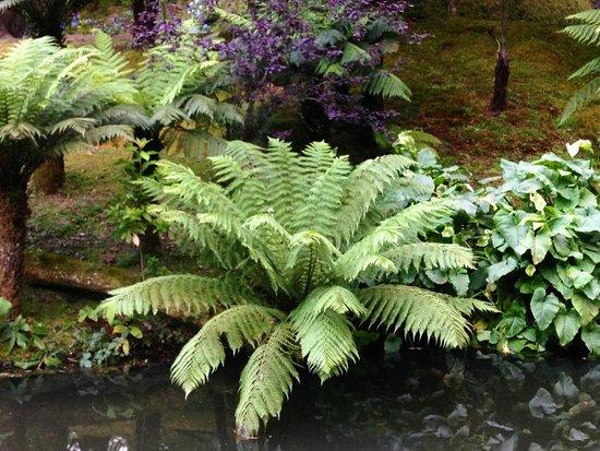 Terra Nostra Garden Hotel: gardens