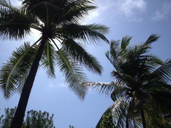 Kuredu Island Resort & Spa: Вместо зонтов