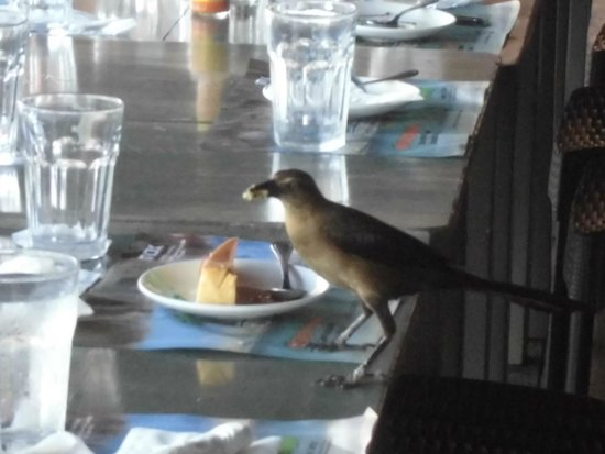 Mi Ranchito: デザートを食べる小鳥