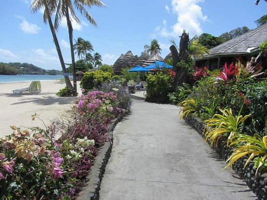 Young Island Resort: Beautiful flowers along the pathways