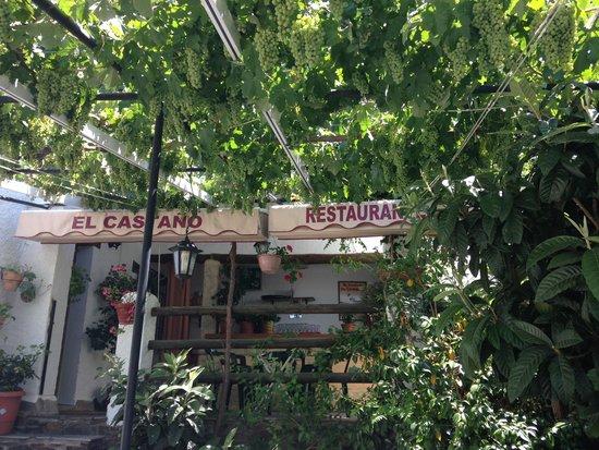 El Castano Vine canopy & Vine canopy - Picture of El Castano Pampaneira - TripAdvisor