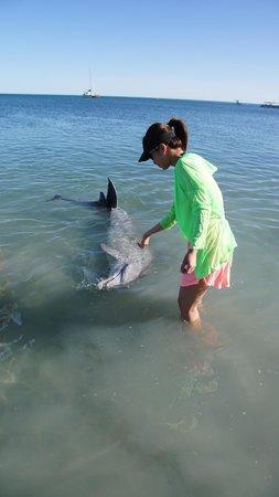 RAC Monkey Mia Dolphin Resort : 幸運地親自餵到海豚