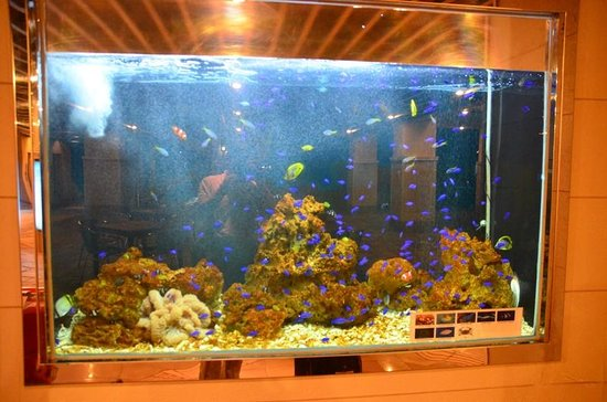 Hotel East China Sea: 1階エレベータホールにカクレクマノミの水槽が・・・