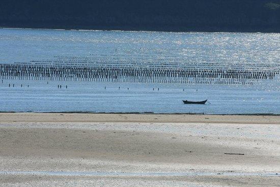 St Jacut Beaches : Bouchots