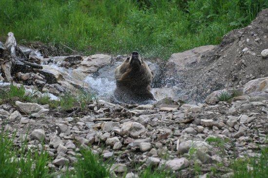Kicking Horse Mountain Resort: Boo dans l'eau