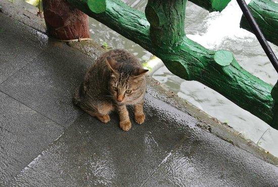 Ping Hsi Branch Railway Line : ガイドの猫ちゃん