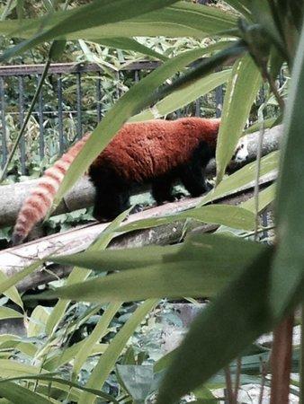 Zoo animal 2 picture of timhotel jardin des plantes paris tripadvisor - Zoo de paris jardin des plantes ...
