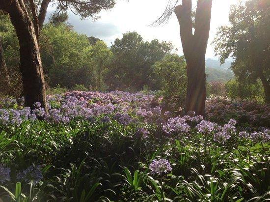 Almaa Sintra Hostel: Foto que tirei de um dos Jardins do Alma Sintra Hostel