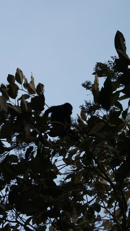 Hotel Boca Brava : Mono aullador
