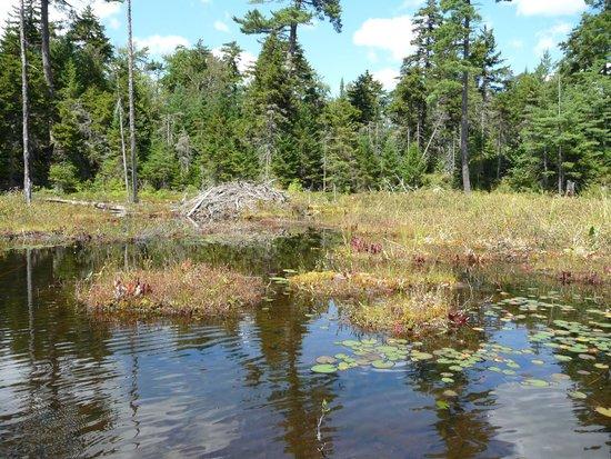 Adirondack Park: Beaver Lodge