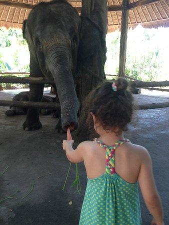 Bali Safari & Marine Park: my daughter loved feeding the elephants every day
