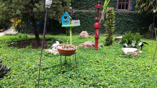 Mi Viejo Ranchito: Garden