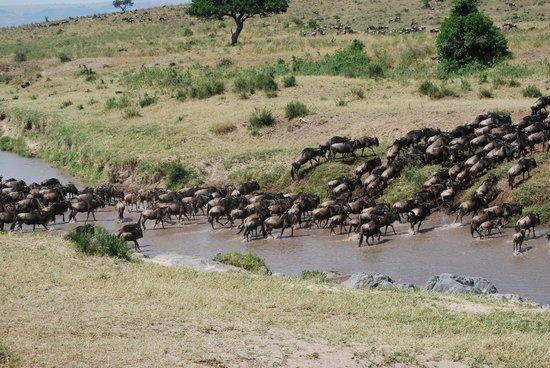 Enkewa Camp: CRUCE DE ÑUS DE KENIA A TANZANIA