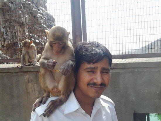 Rajasthan Four Wheel Drive Pvt. Ltd.: Hukam with monkey