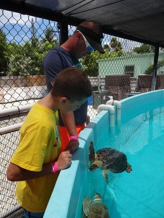 The Turtle Hospital: viewing tutle