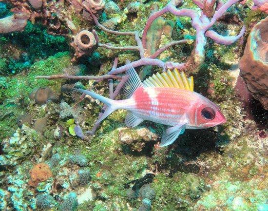 Sea Robin Cozumel: Squirrel Fish