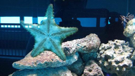 Miami Seaquarium: sea star