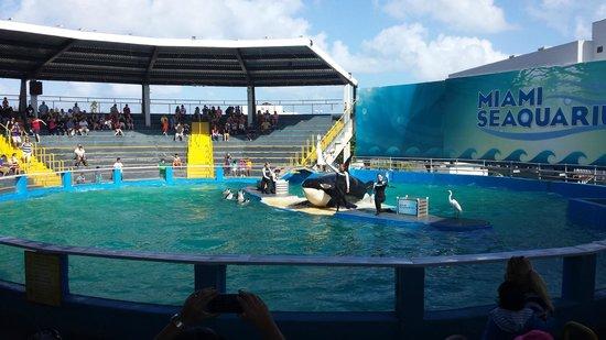 Miami Seaquarium: Show