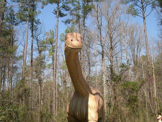 Museum of Life + Science: brontosaurus