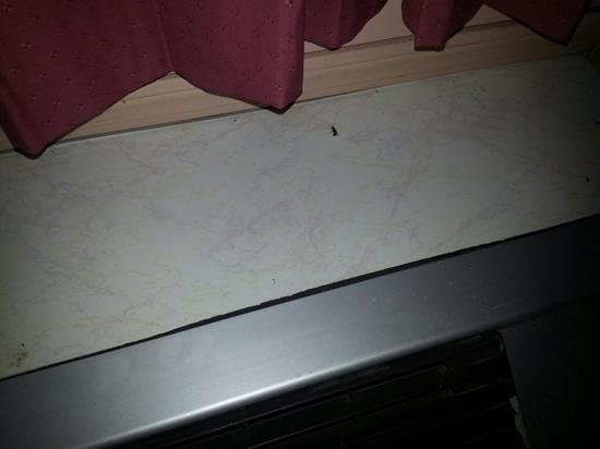 Mayfield Inn Clarion: cockroach on air conditioner