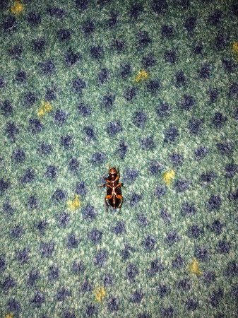 Palace Hotel: Una cucaracha que encontramos en la cortina de la suite