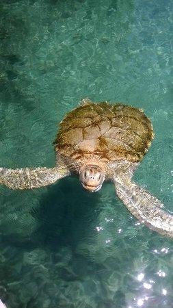 Grand Sirenis Riviera Maya Resort & Spa: Turtle at Xcaret