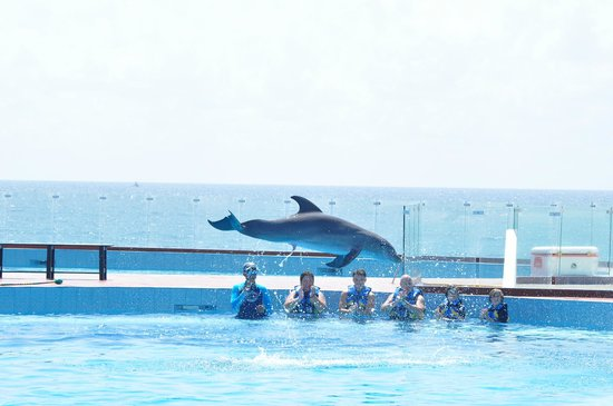 Grand Sirenis Riviera Maya Resort & Spa: Dolphin Experience
