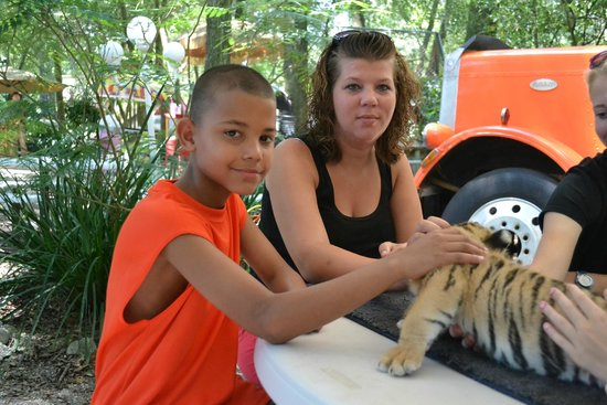 Dade City's WIld Things : With Liberty the Tiger Cub (4 months old)
