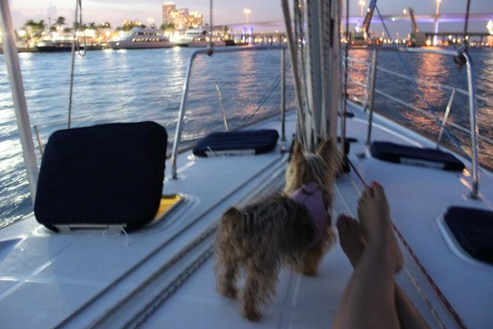 Miami Sailing - Private Day Charters: sailing