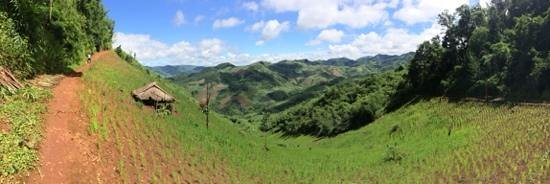 Akhajulyah Guesthouse: One of the walks to learn about crops the Akha grow