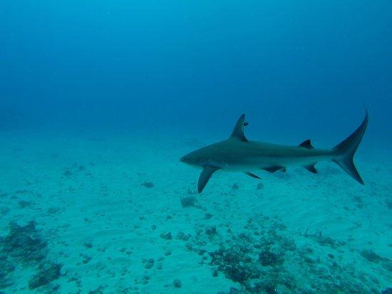 Scuba Fun Dive Center: 1