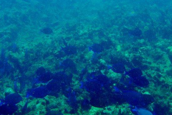 South Coast Horizons: Snorkeling at Cades Reef