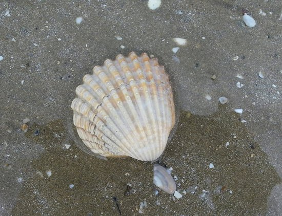 Spa Marin du Val Andre : A pretty shell from the beach opposite the Hotel.
