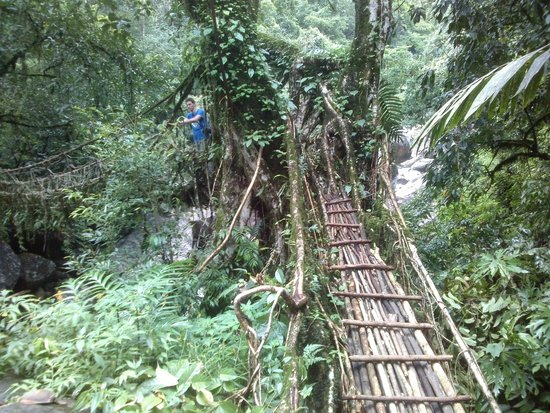 Double Decker Living Root Bridge: first root bridge, before first village to the right
