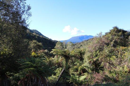Waimangu Volcanic Valley : View