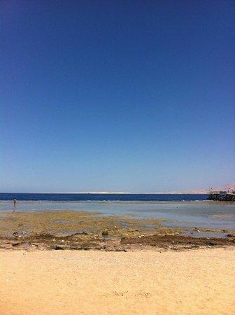 Rehana Sharm Resort: Пляж