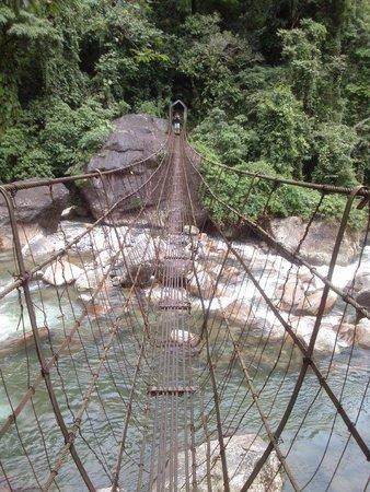 Double Decker Living Root Bridge: one of the two iron bridges