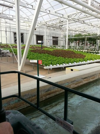 Epcot: Hidden Mickey in Lettuce and Tomato Tree on the Land Boat Ride