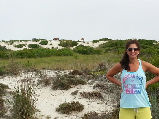 Assateague Island National Seashore Campground: Horses in the backdrop
