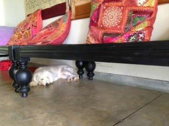 Hibiscus Villa : ah...sleep!