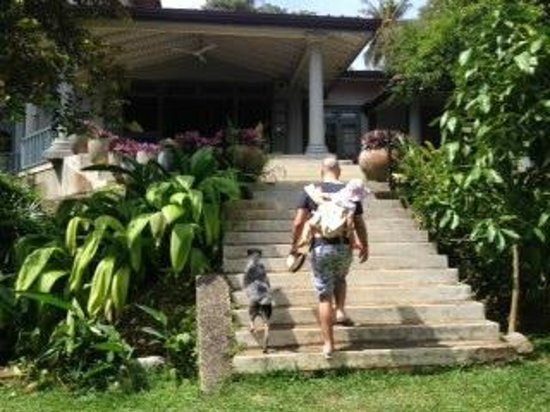 Hibiscus Villa : Escorted by a friendly pooch