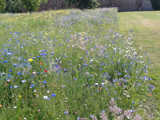 Astley Hall: Wild flowers