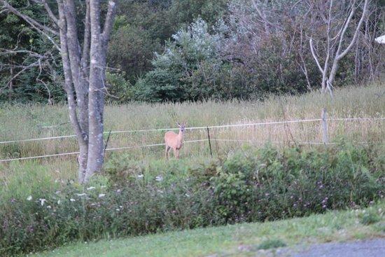 Lunenburg Oceanview Chalets : Deer