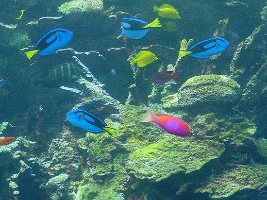 Georgia Aquarium : Tropical Fishies