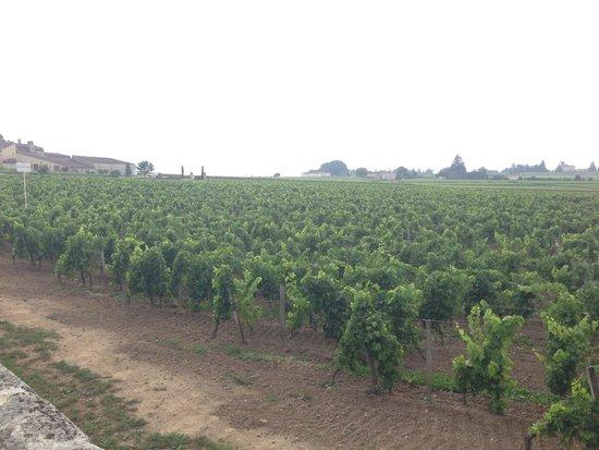 Bordeaux Wine Trails : The Vineyards