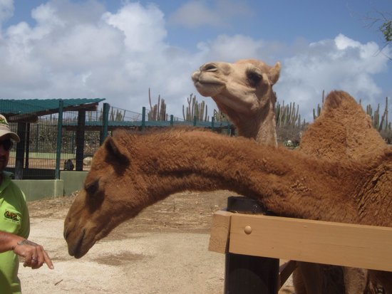 Philip's Animal Garden: Beautiful camels