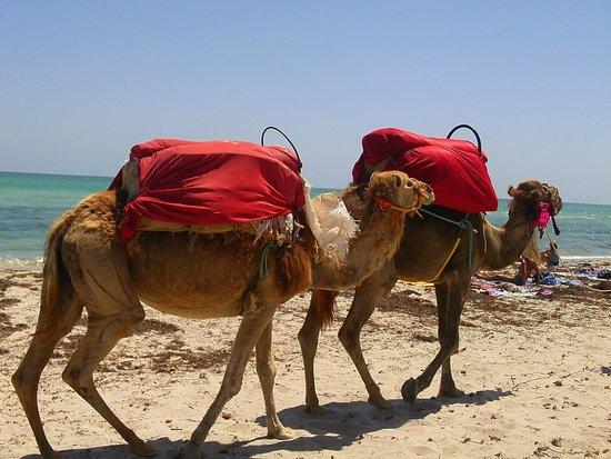 Miramar Petit Palais : mr camel