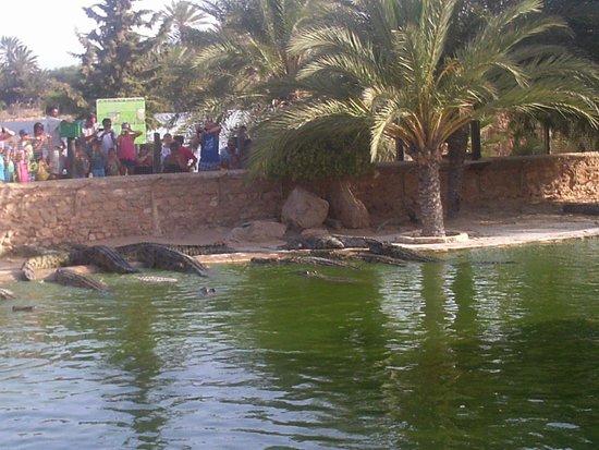 Miramar Petit Palais : crocodile park